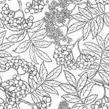 Rowan seamless pattern Stock Image