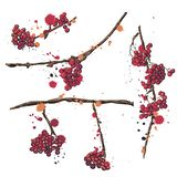 Rowan. Set of vector hand drawn elements. Rowan branch with berries . Set of drawings for cards, banners and advertising vector illustration