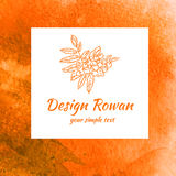 Rowan sketch  on white background, line art, Watercolor orange texture, Design berry for packaging, vector fruit Stock Photography
