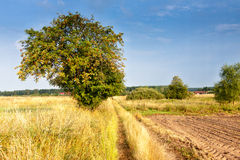 Rowan. Summer in Mazurian district in Poland Royalty Free Stock Photography