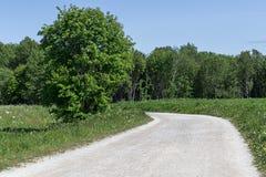 Rowan Tree por el camino de tierra en Suecia Fotos de archivo libres de regalías