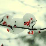 Rowan tree in the snow Stock Photography