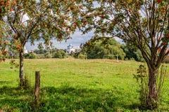 Rowan trees on meadow Royalty Free Stock Image