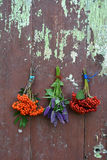 Rowan and viburnum berry and anise hyssop bunch Stock Images