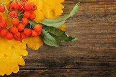 Rowan on wooden, autumn background Stock Photo