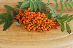 Rowan on wooden background Royalty Free Stock Images