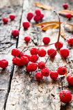 Rowan on a wooden background selective focus Royalty Free Stock Photo