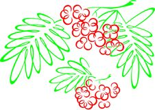 Rowanberries. Artistically imaged vector drawing of rowanberries (ashberry or mountain ash) and its branches Stock Image