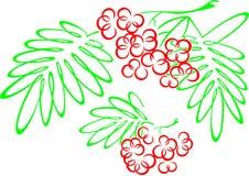 rowanberries Στοκ Εικόνα