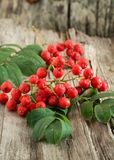 Rowanberries Stock Image