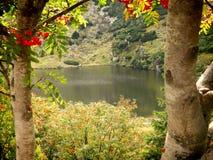 Rowanberry на предпосылке пруда горы стоковое изображение rf
