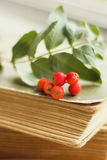 Rowanberry Stock Photo