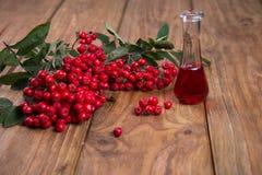 Rowanberry Стоковые Фотографии RF