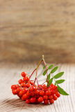 Rowanberry or ashberry on a wooden board Royalty Free Stock Photo