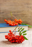 Rowanberry or ashberry on a wooden board Stock Image