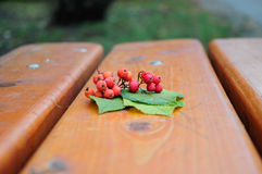 Rowanberry. Autumn Rowanberry on the bench Royalty Free Stock Photo