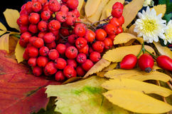 Rowanberry and autumn leaves Stock Photo