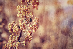 Rowanberry background Royalty Free Stock Photos