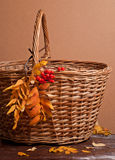 Rowanberry and basket Royalty Free Stock Images