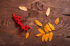 Rowanberry and leaves Royalty Free Stock Photography