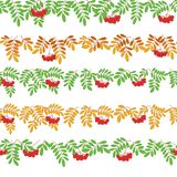 Rowanberry, seamless Stock Image