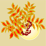 Rowanberry and sun vector Royalty Free Stock Photo