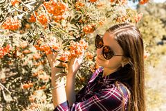 Rowanberry tree. The girl admire the rowanberry. The girl admire the rowanberry royalty free stock image