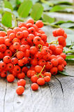 Rowanberry on wooden table Royalty Free Stock Images