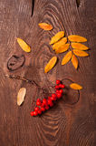 Rowanberry and yellow leaves Stock Photography