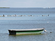 Rowboat and birds in lake, Lithuania Stock Photography