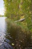 Rowboat stranded ashore. At a lake in Finland Royalty Free Stock Photo
