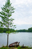 Rowboat tied to tree Royalty Free Stock Images