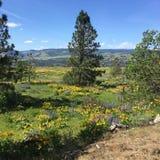 Rowena Crest, de Kloof van Colombia, Oregon stock afbeelding