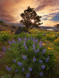 Rowena Crest at Sunrise. Rowena Crest is a popular place for hiking at Columbia Gorge, OR Royalty Free Stock Photo