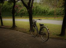 rower Zdjęcie Royalty Free