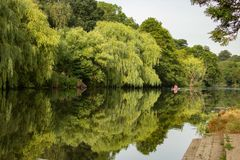 Rower enjoys the calm river royalty free stock image