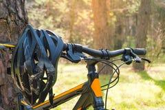 Rower Górski na lato śladzie w Pięknym Sosnowym lesie Zaświecającym słońcem Przygody i kolarstwa pojęcie Fotografia Royalty Free