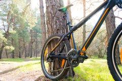 Rower Górski na lato śladzie w Pięknym Sosnowym lesie Zaświecającym słońcem Przygody i kolarstwa pojęcie Zdjęcia Royalty Free