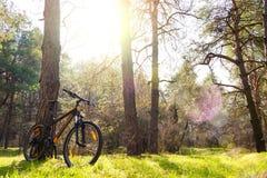 Rower Górski na lato śladzie w Pięknym Sosnowym lesie Zaświecającym słońcem Przygody i kolarstwa pojęcie Obrazy Stock