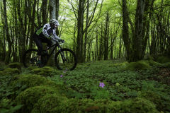 Rower górski w lesie Obrazy Royalty Free