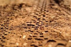 Rower opony ślada na błotnistej ślad królewskości Opona ślada na mokrej błotnistej drodze, abstrakcjonistyczny tło, tekstura mate Zdjęcie Royalty Free