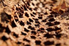 Rower opony ślada na błotnistej ślad królewskości Opona ślada na mokrej błotnistej drodze, abstrakcjonistyczny tło, tekstura mate Fotografia Stock