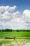 Rower in Vietnamese conical hat among green rice fields Royalty Free Stock Photography
