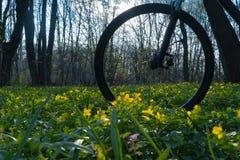 Rower w drewnach wśród kwiatów - kolorów żółtych kwiaty zdjęcie royalty free