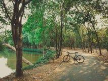 01 - Rowerowy kolarstwo na bagiennej drodze w parku zdjęcie stock