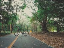 27 - Rowerowy kolarstwo Na szerokiej drodze w wielkim lesie zdjęcie royalty free