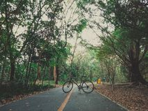 25 - Rowerowy kolarstwo Na szerokiej drodze w wielkim lesie obraz stock