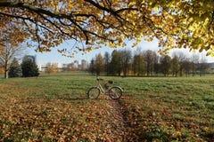 Rowerowy spacer w jesień parku zdjęcie royalty free