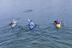 3 rowers с каное Стоковое фото RF