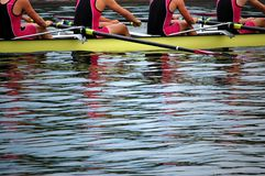 Rowers in Action Stock Image